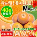 奄美大島たんかん/贈答用40個入り/Mサイズ/タンカン/送料無料