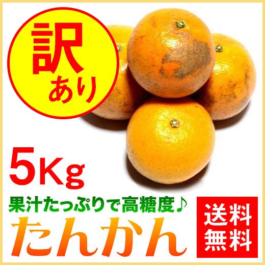 奄美大島たんかん5kg/訳ありタンカン/ご家庭用/送料無料