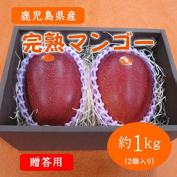 南国の恵み完熟マンゴー 秀品 <贈答用> 鹿児島県産 約1.0kg(2個入り)送料込み 予約販売 数量限定