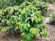 プランデルグアヤボパカマラ