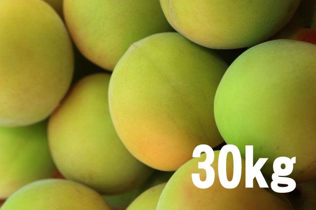 手もぎ完熟梅(南高梅)30kg