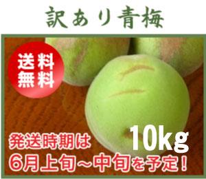 訳あり青梅(南高梅)10kg