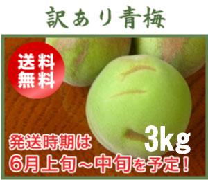 訳あり青梅(南高梅)3kg