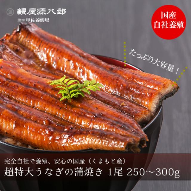 うなぎ蒲焼き 超特大250~300g前後 【送料無料】