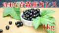 青森産冷凍カシス1000g(自家栽培)