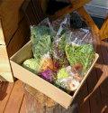 無農薬野菜お試しセット1080円分(産地:愛媛県伊予市 自社農園) 別途送料必要