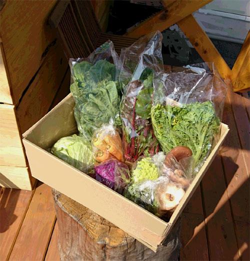 無農薬野菜お試しセット1000円コース(産地:愛媛県伊予市 自社農園) 別途送料必要