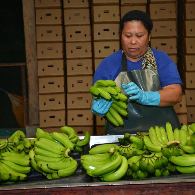 バランゴンバナナ フィリピン