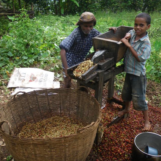 コーヒー 東ティモール 東チモール アジア