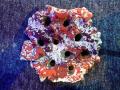 【Frag専用プレートFrag Rock】JS Frag Rock No.22