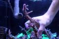 【Coral de Sakieda G&G】Acropora intermedia(シリアルNo.00167)