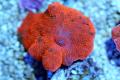 Candy crush mushroom(No.07)