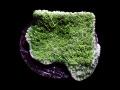 グリーン・ウスコモンサンゴFrag Green Montipora(No.04)