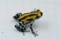 Ranitomeya sirensis(lamasi divesoria)