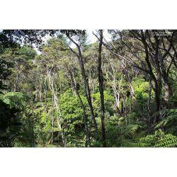 【ニュージーランド産】2015年11月産 イーストケープ・ケモタイプ 高トリケトン低臭 マヌカ精油5ml