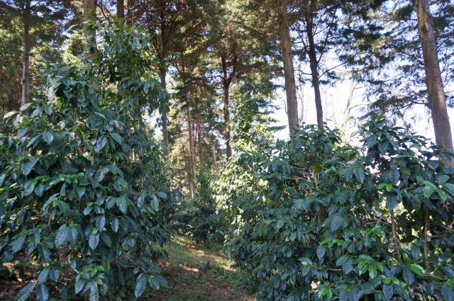 農園を奥に進むとまるで森の中にいるようです。
