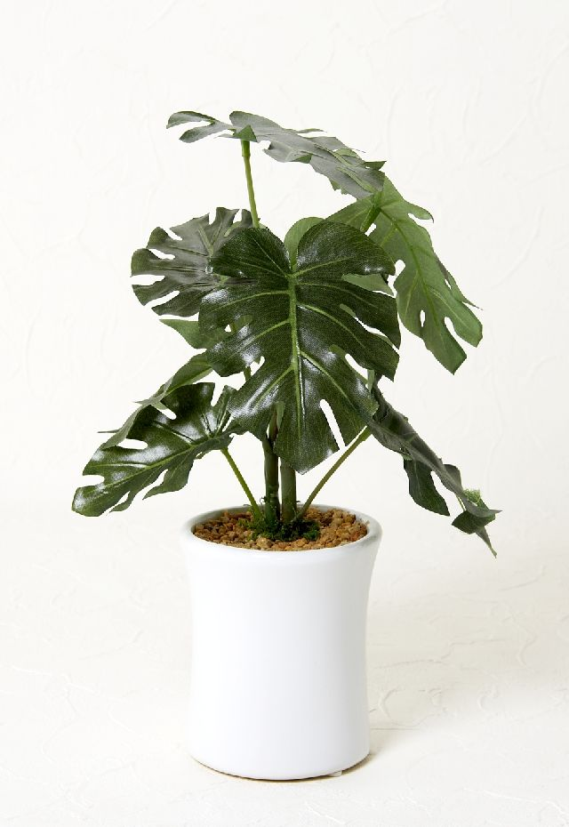 【造花 観葉植物】モンステラポット(インテリアグリーン)