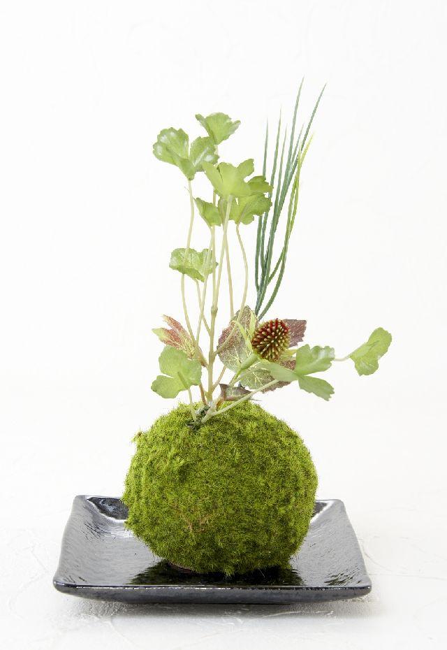 【造花 観葉植物 インテリアグリーン】こけ玉 和アレンジP(下皿付き)