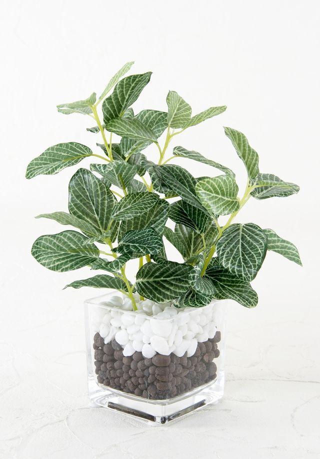 【造花 観葉植物 インテリアグリーン】フィットニアグリーン・ミニガラスポットアレンジ