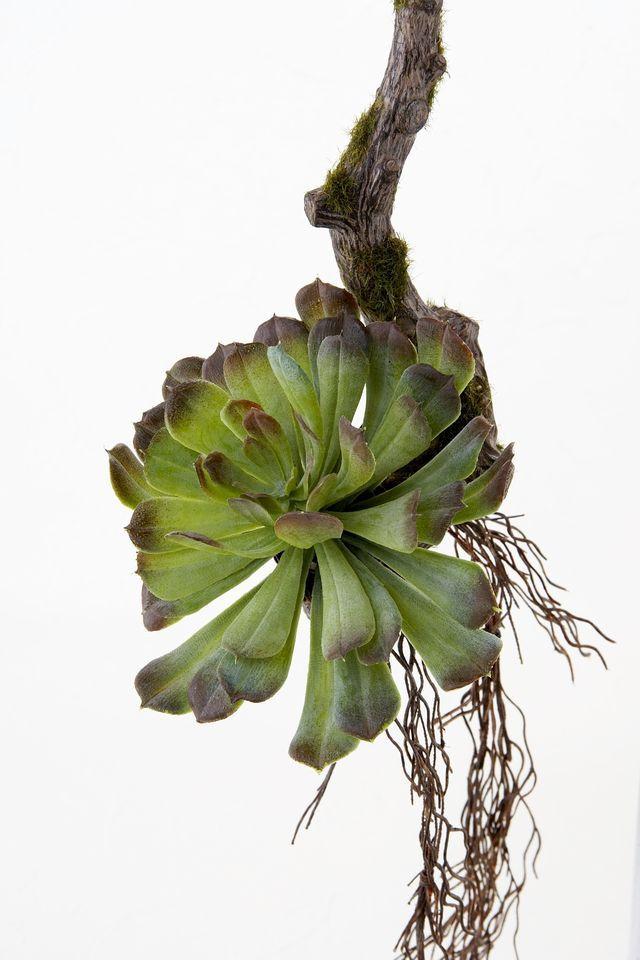 【多肉植物・壁掛け・造花 アーティフィシャルフラワー】ナチュラルハンギング・グリーンアレンジ