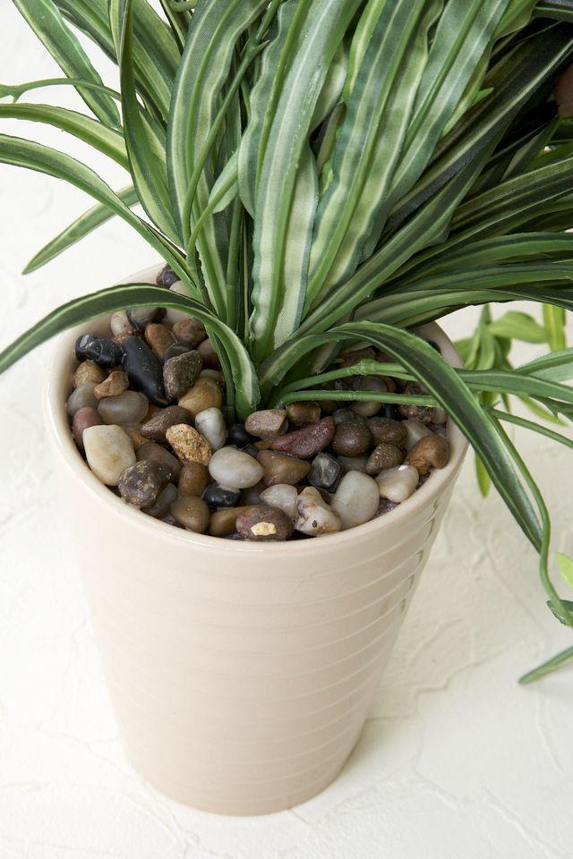 【造花 観葉植物】オリズルランの鉢植え(インテリアグリーン)