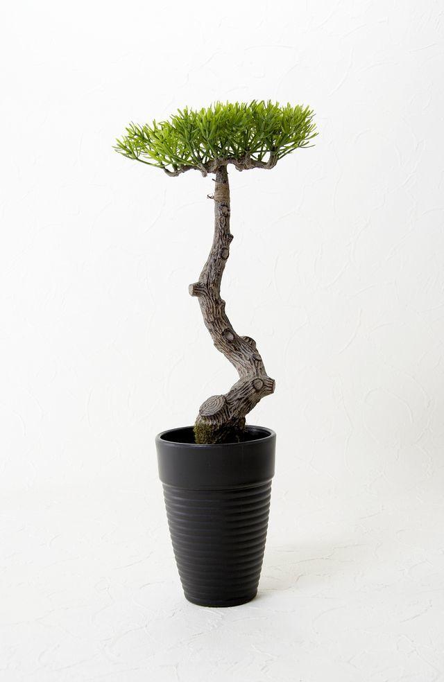 【造花 観葉植物】マキの鉢植え(スタイリッシュインテリアグリーン)