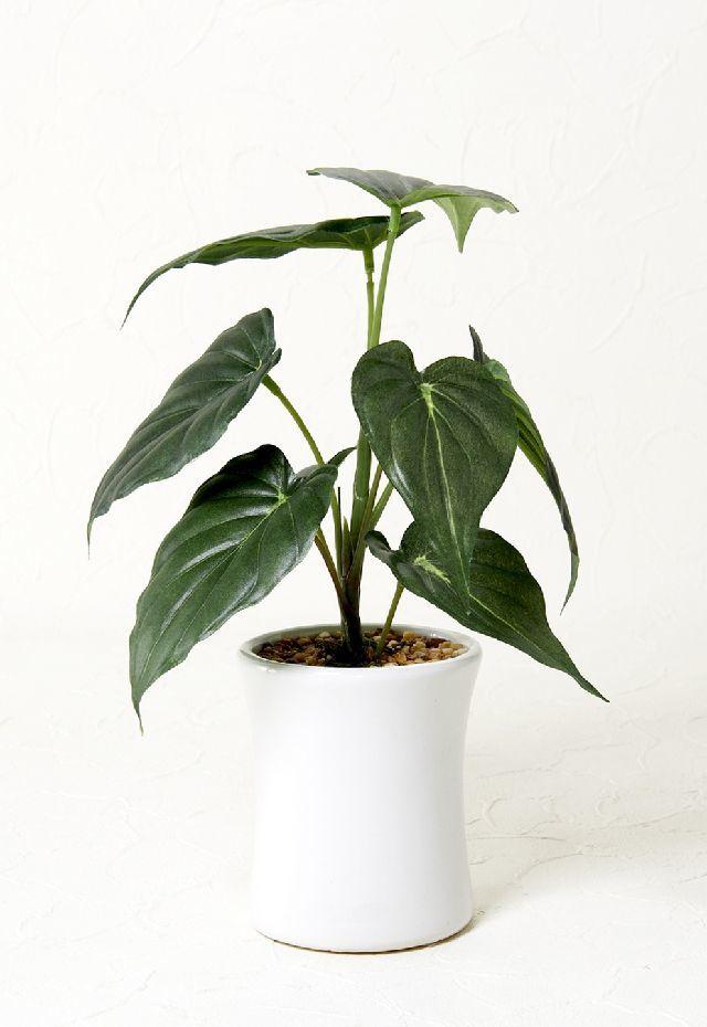 【造花 観葉植物】アロカシアポット(インテリアグリーン)