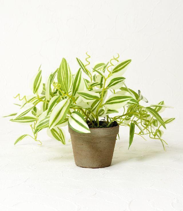 【造花 観葉植物】ワンダリングポット(インテリアグリーン)