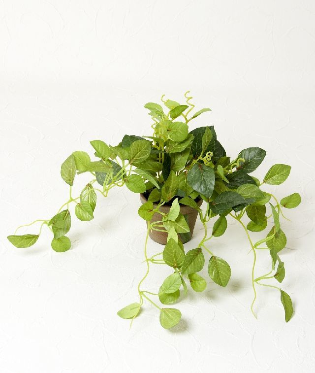 【造花 観葉植物】チャーリーポット(インテリアグリーン)