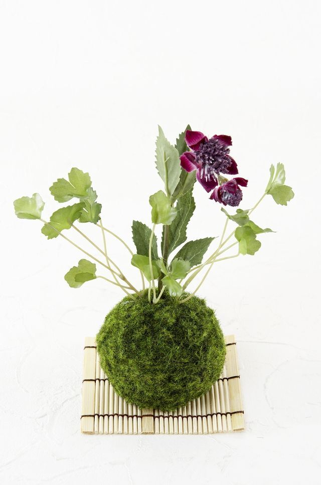 【造花 観葉植物 インテリアグリーン】苔玉 和風アレンジ12(下皿付き)