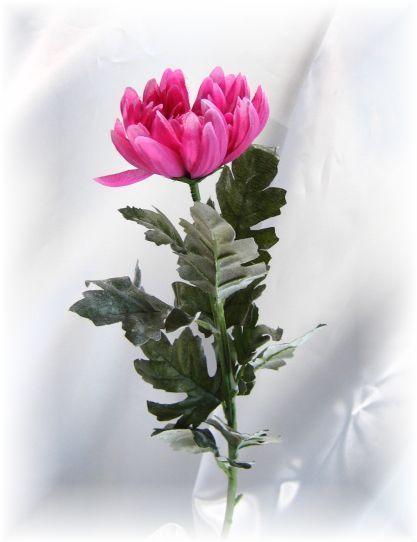 山科菊(ラベンダー)