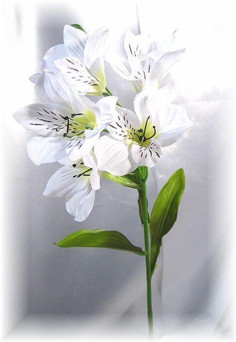 アルストロメリア(ホワイト)