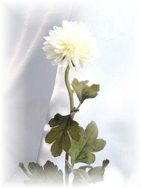 ピンポンマム(ホワイト)
