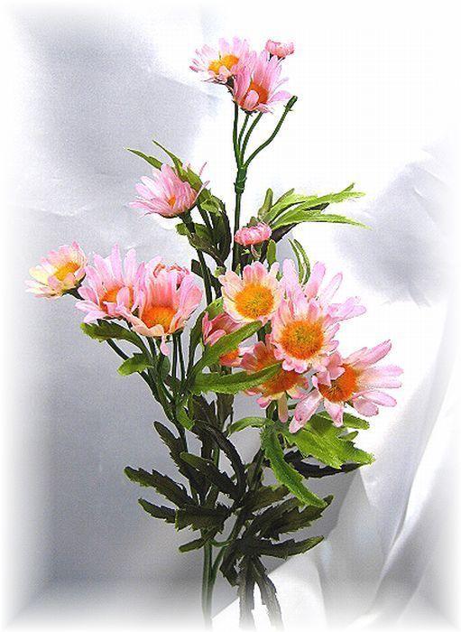 リトルマーガレット(ピンク)