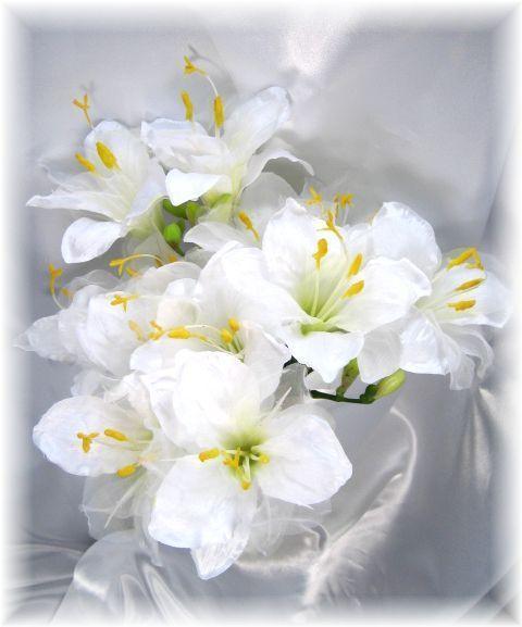 スカシユリ(ホワイト)