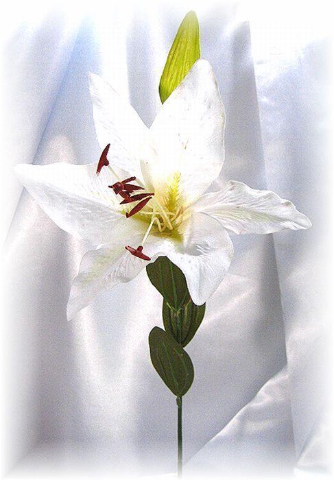 カサブランカ・シンプルホワイト