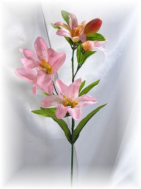 リトルタイガーリリー(ピンク)