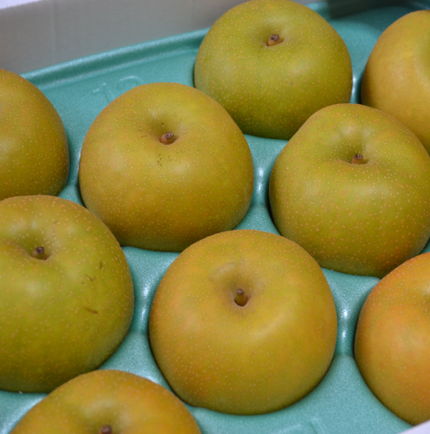 鶴岡産 豊水梨5kg(16玉、2L)