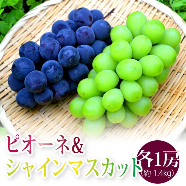 山形県産ピオーネ&シャインマスカット詰合せ(各1房)