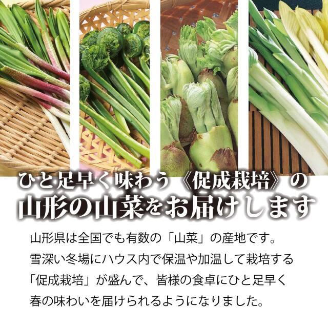 山菜 促成栽培