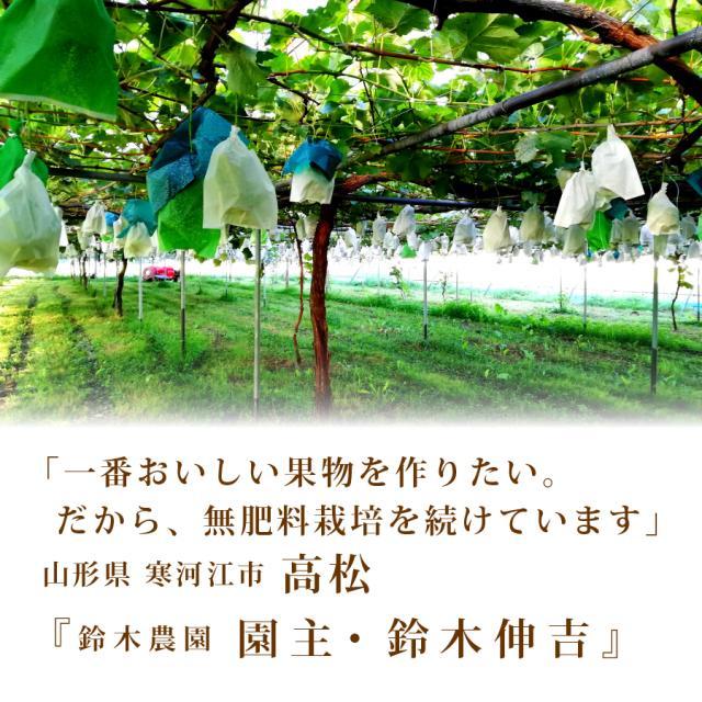 鈴木農園の巨峰