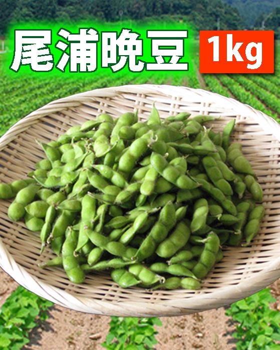 【送料無料】鶴岡産 だだちゃ豆(尾浦)1kg 山形セレクション認定品