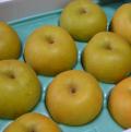 鶴岡産 豊水梨5kg(14玉、3L)