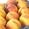 黄金桃(無袋栽培)