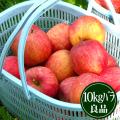 豊田の蜜入りふじりんご10kgバラ良品