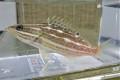 ※超特価 激レア アズキハタ幼魚 【仕入れ個体】 ※12センチ程度 ※11/5入荷