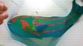 ド迫力 キヌベラ特大 【屋久島ハンドコート】 ※38センチ程度 ※12/3入荷