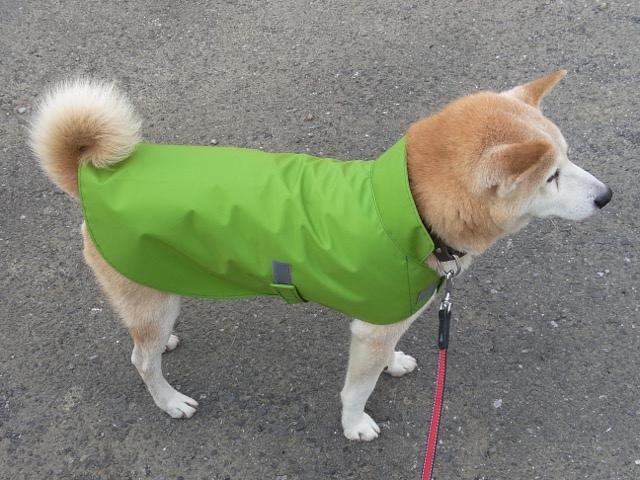 柴犬 レインコート