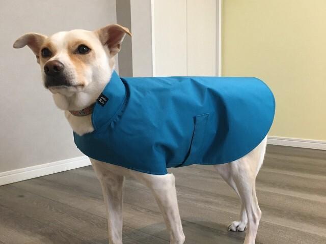 ブルーのレインコートを着た日本犬ミックス