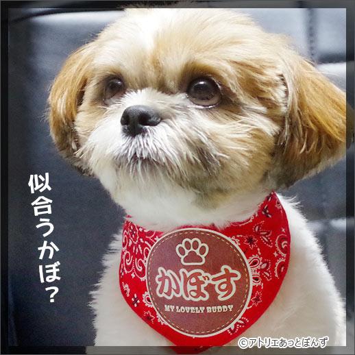 ペット用名前入りバンダナ『ペイズリー』-革風ワッペン-犬・猫グッズ